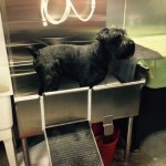 Stainless Steel Sink for Dog Washing
